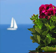 Liguria mare, fiori e palme