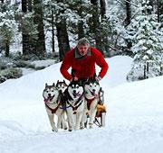 Sulla neve con gli husky